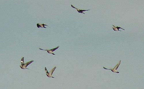 Visible migration